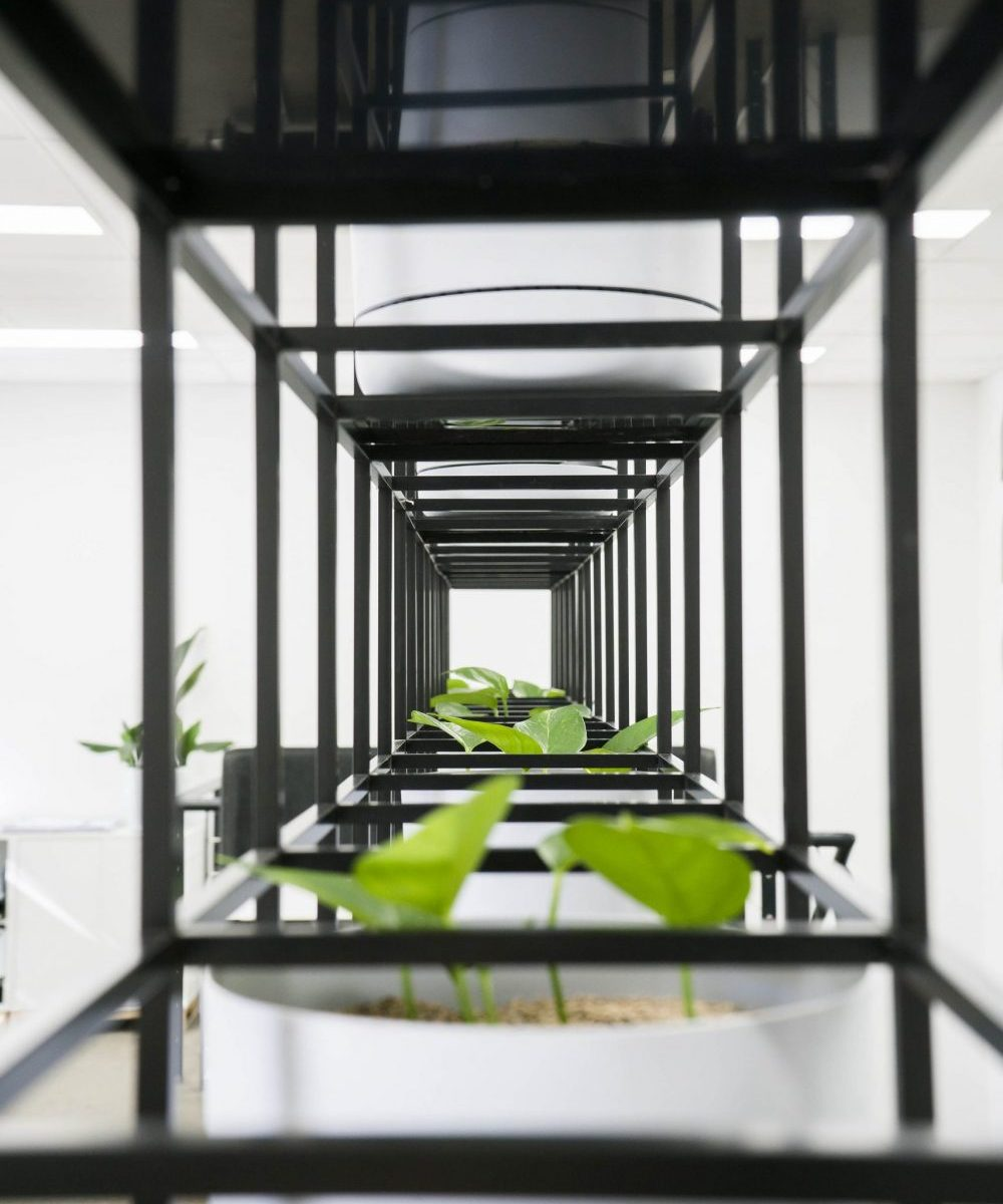 Workspace, workplace, education, workplace plants, Decocorp